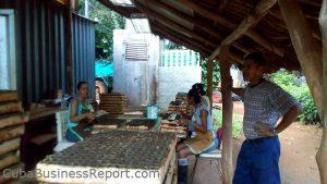 workers-at-organoponico-vivero-alamar-cuba