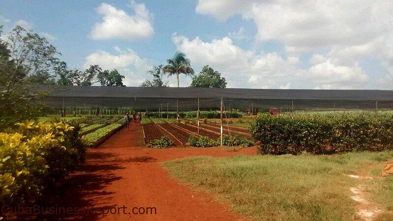 US-Cuba-Agriculture