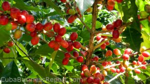 CBR-cuban-coffee-deal-nestle-deal