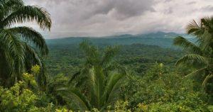 cuba-reforestry-environment