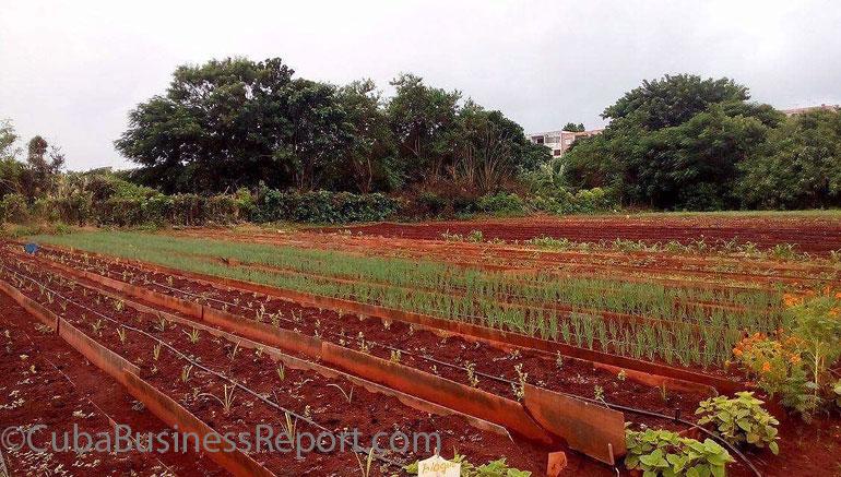 cuba-agriculture