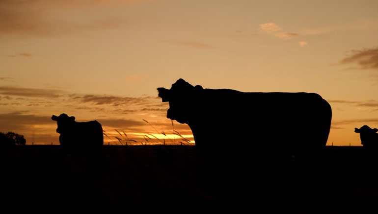 cuba-sustainable-agriculture-farming