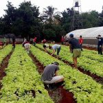 A New Partnership – the Small Farms and the Foreign Investors