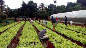 cooperative-farm-cuba