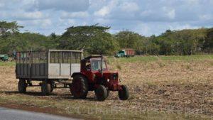 Cuba agriculture, US exports to Cuba