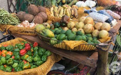Cuba-food-industry-MINAL