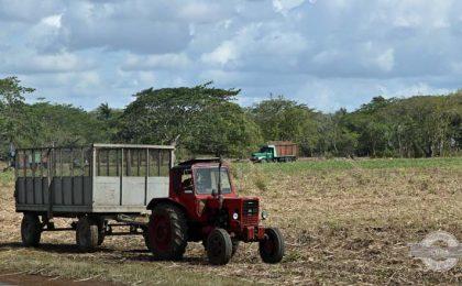cuban-agriculture